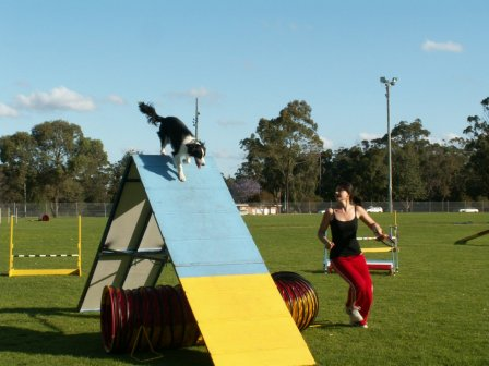 how to train your dog to do agility course